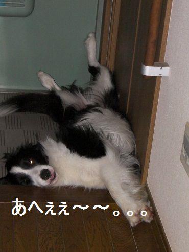 2010.5.26 ふぁぁぁ@@ 004.JPG